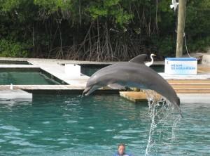Dolphin at Seaquarium